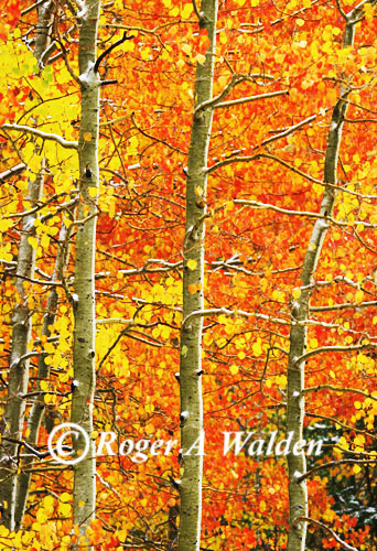 fall color - aspen - hopw valley